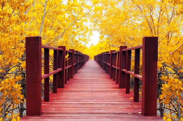 Ponte de madeira e floresta de outono.