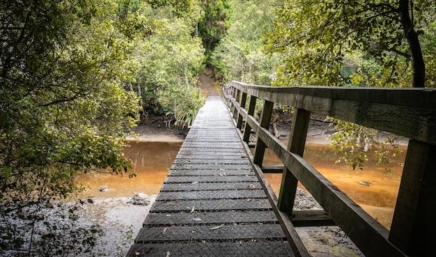 Ponte de madeira levando acima do rio lamacento na selva baleada na ilha de stewart na nova zelândia