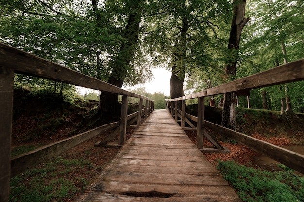 Ponte de madeira rústica na floresta verde nas montanhas dos cárpatos