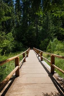 Ponte de madeira sobre o rio da floresta