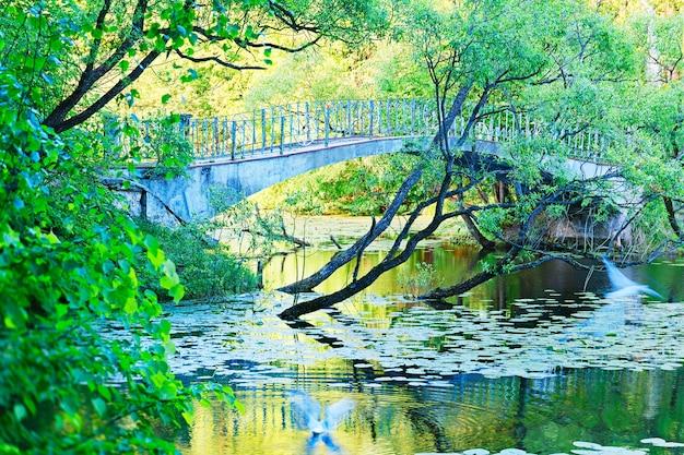 Ponte dramática no parque de verão com fundo de pássaros voando