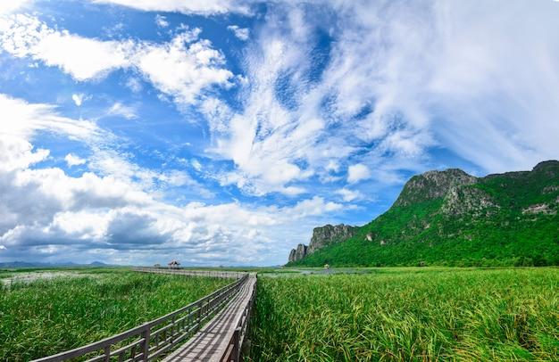 Ponte madeira, em, lago lotus, em, khao, sam roi yot, parque nacional, tailandia