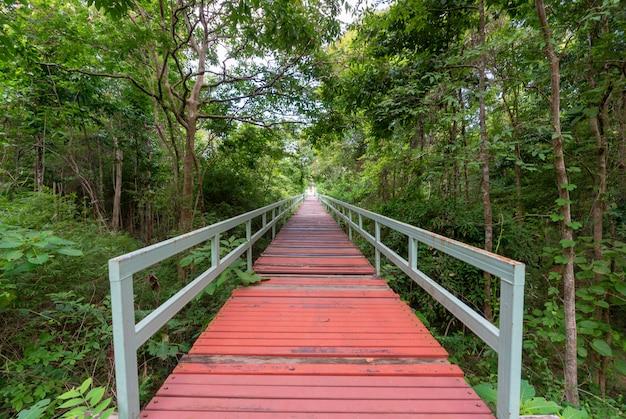 Ponte na floresta tropical enevoada.