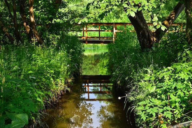 Ponte sobre o riacho na floresta, ponte de madeira no parque