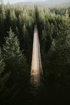 Ponte sobre um rio em uma floresta