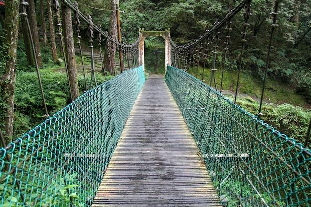 Ponte verde na floresta alishan em taiwan
