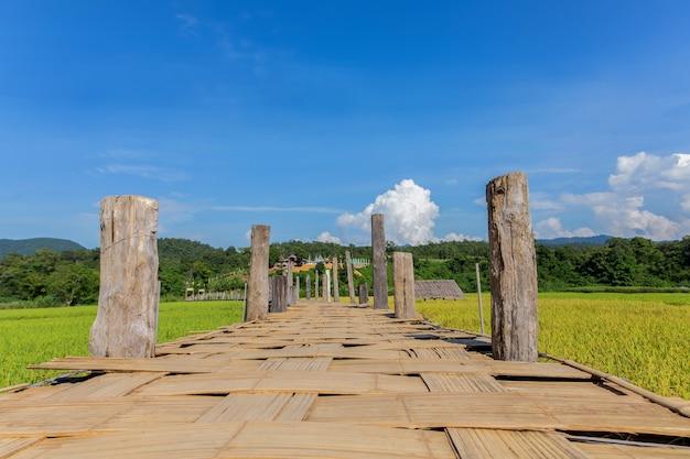 Ponte zutongpae
