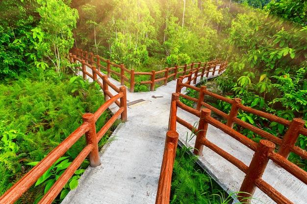 Pontes cruzadas na floresta tropical