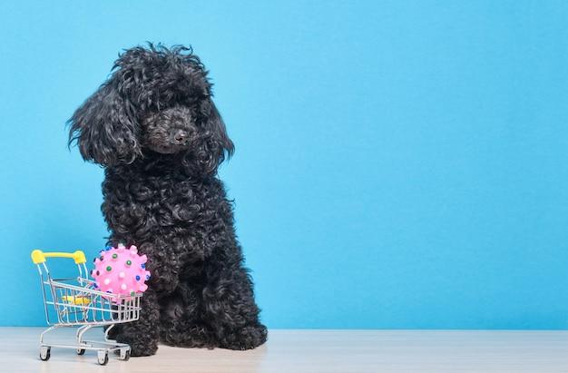 Poodle toy fofo preto com carrinho de compras na parede azul, espaço para cópia do conceito de pet shop