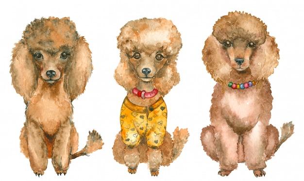 Poodles desenhados à mão