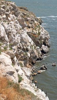 População de corvos-marinhos no cabo kazantip (crimeia, ucrânia). imagem composta de três tiros.