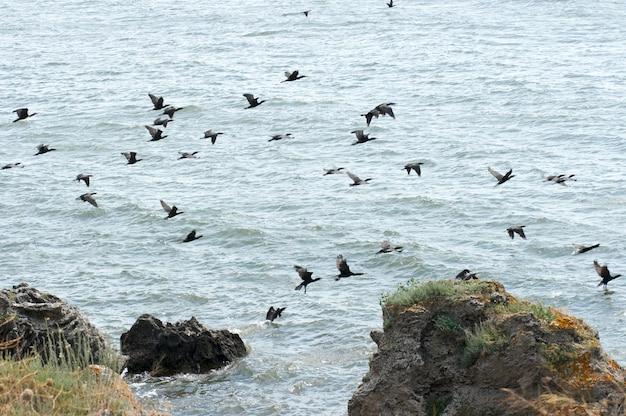 População de corvos-marinhos no cabo kazantip (krimea, ucrânia)