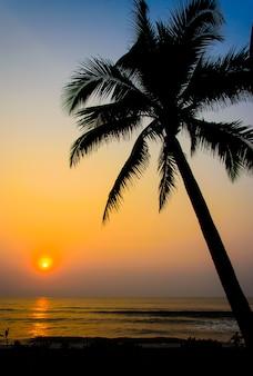 Pôr do sol árvore