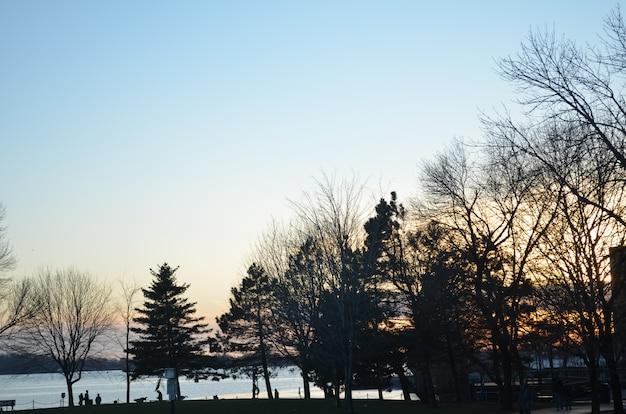 Por do sol atrás das árvores com a baía de toronto no fundo