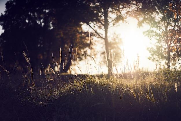 Por do sol atrás das árvores