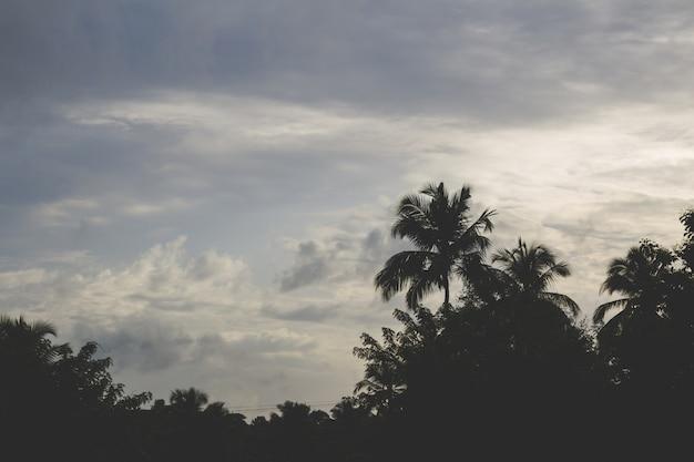 Por do sol atrás de palmeiras
