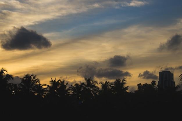 Por do sol atrás de silhuetas de palmeiras e edifícios