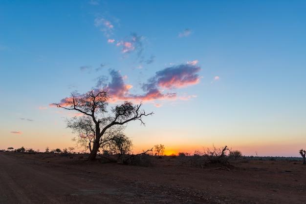 Pôr do sol colorido no mato africano