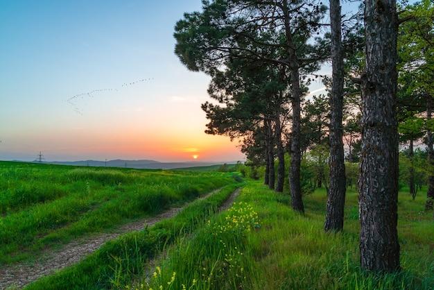 Pôr do sol colorido sobre campos verdes