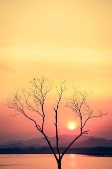 Pôr do sol com árvore morta