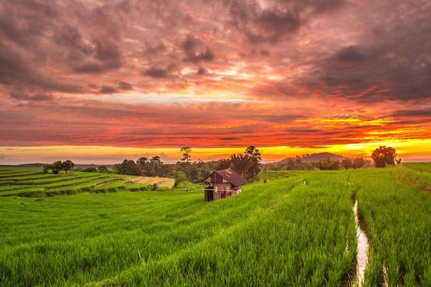 Pôr do sol com céu lindo em arrozais verdes depois da chuva
