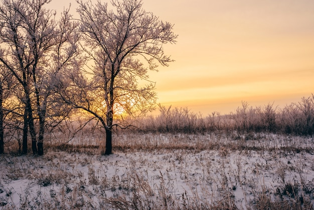 Pôr do sol de inverno na floresta