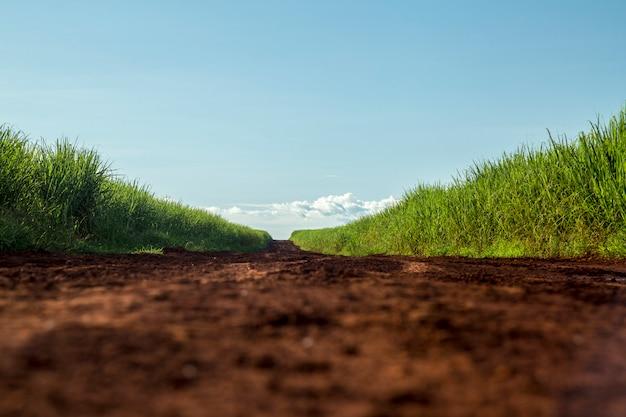 Pôr do sol de plantação de cana de açúcar