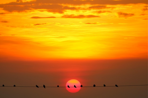 Pôr do sol de volta na silhueta escura noite laranja vermelho nuvem no céu e pássaro na linha de energia elétrica