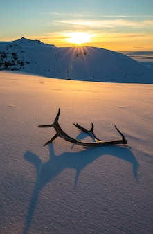 Pôr do sol dourado com chifres de rena, deitado na neve