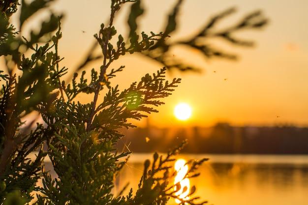Pôr do sol e closeup de ramo de árvore