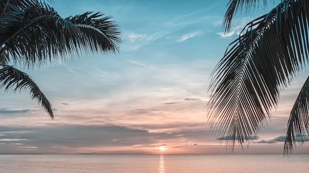 Pôr do sol e palmeiras - fundo da natureza