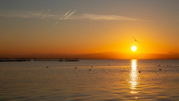 Pôr do sol em albufera de valência com gaivotas na água.