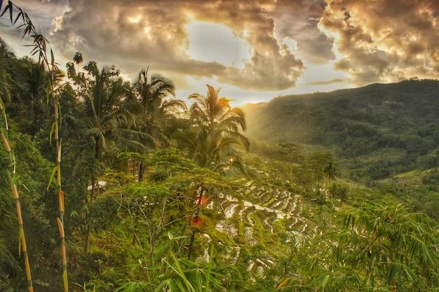 Pôr do sol em um campo de arroz
