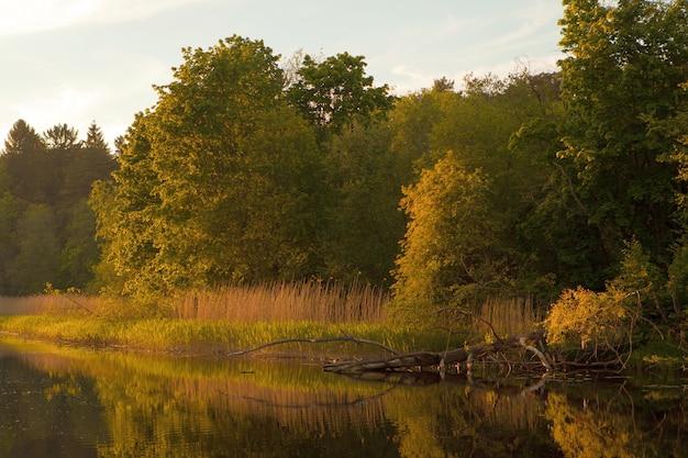 Pôr do sol laranja sobre o rio em paisagem de verão com árvores caídas e grama perto do rio