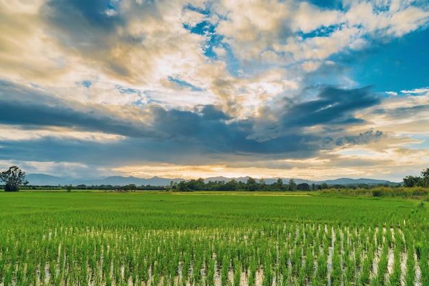 Pôr do sol lindo campo cênico natural e fundo agrícola de campo verde