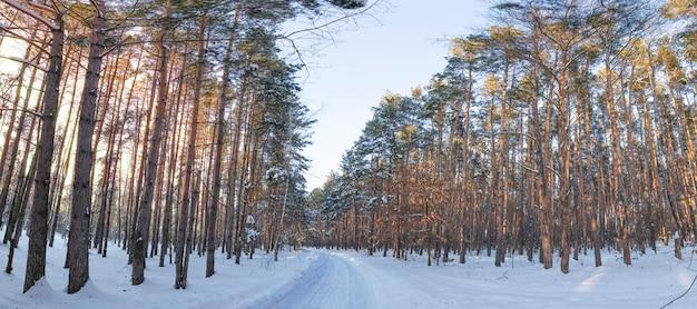 Pôr do sol maravilhoso na floresta de inverno