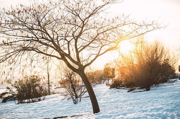 Pôr do sol na neve do campo de inverno