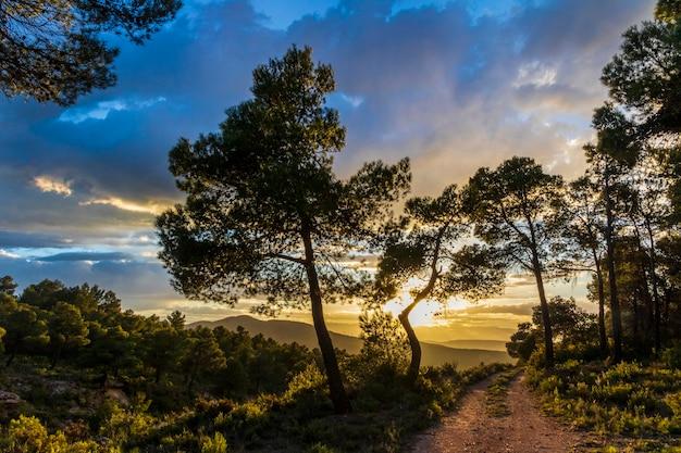 Pôr do sol nas montanhas entre os pinheiros em um dia com nuvens e com uma estrada.