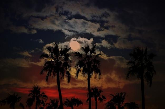 Pôr do sol no arizona com silhuetas de palmeiras contra um fundo de céu e nuvens de lua
