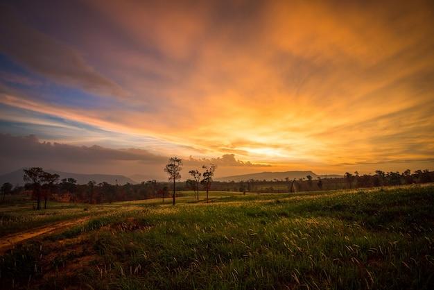 Pôr do sol no campo e grama verde prado com estrada rural e fundo da árvore