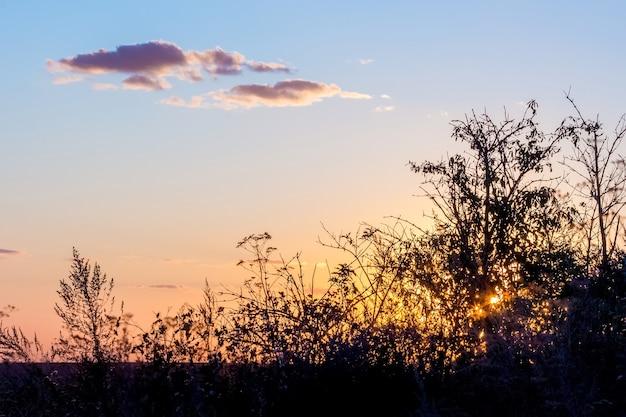 Pôr do sol no campo. silhuetas de árvores no fundo do céu durante o pôr do sol