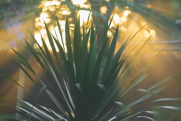 Pôr do sol no jardim