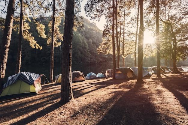 Pôr do sol no parque de campismo com tenda na floresta de pinheiros