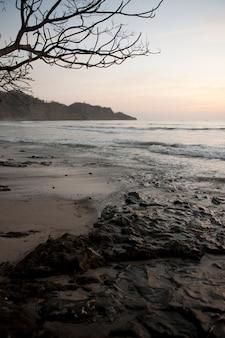 Pôr do sol noite legal sobre a praia calma costa rica com árvore nua na vanguarda e península no fundo