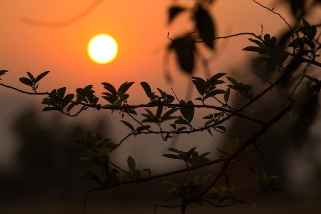 Pôr do sol o verão