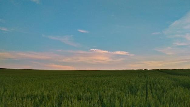 Pôr do sol rosa suave no campo