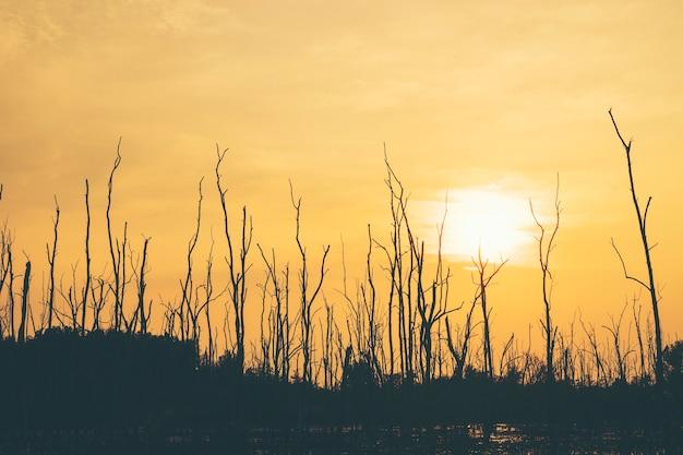 Por do sol seco da floresta da árvore