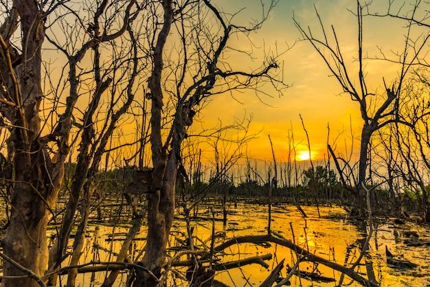 Pôr do sol sobre a floresta de mangue; visão tropical na tailândia