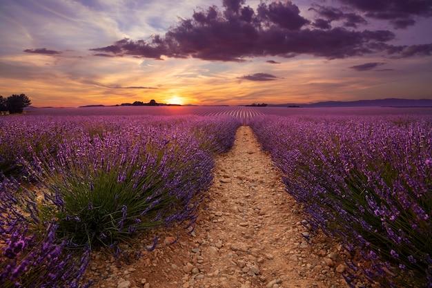 Pôr do sol sobre o campo de lavanda em flor roxa da provença, frança
