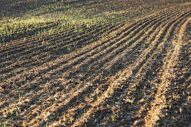 Pôr do sol sobre um campo arado com solo marrom. bela paisagem de outono.